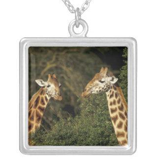 Kenya: Lake Nakuru National Park, Rothschild 2 Silver Plated Necklace