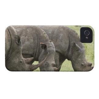 Kenya, Lake Nakuru National Park. Three white iPhone 4 Cover