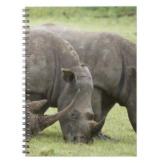 Kenya, Lake Nakuru National Park. Three white Note Books