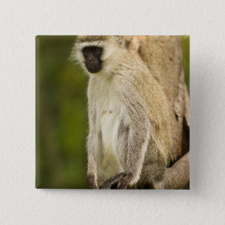 Kenya, Lake Nakuru National Park. Vervet 15 Cm Square Badge