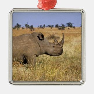 Kenya: Lewa Wildlife Conservancy, white Christmas Ornament