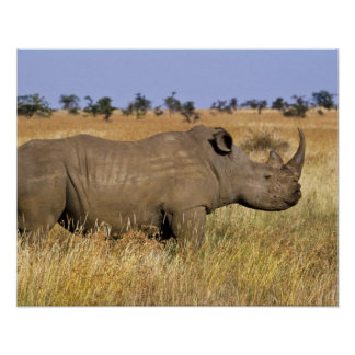 Kenya Lewa Wildlife Conservancy white Poster