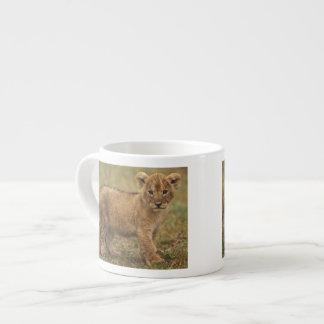 Kenya. Lion Cub (Panthera Leo) Espresso Cup