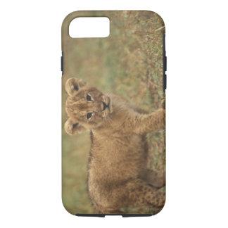 Kenya. Lion Cub (Panthera Leo) iPhone 8/7 Case