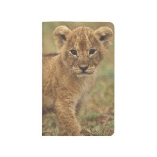 Kenya. Lion Cub (Panthera Leo) Journal