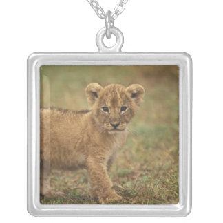 Kenya. Lion Cub (Panthera Leo) Square Pendant Necklace