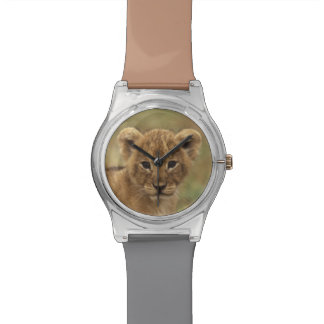 Kenya. Lion Cub (Panthera Leo) Watch