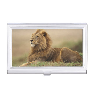 Kenya, Masai Mara. Adult male lion on termite Business Card Holder