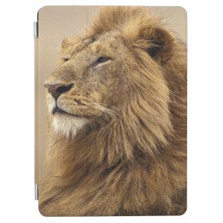 Kenya, Masai Mara. Adult male lion on termite iPad Air Cover