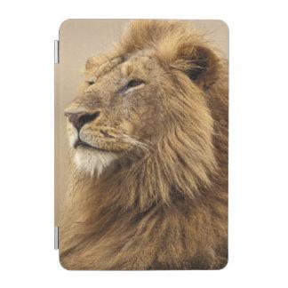 Kenya, Masai Mara. Adult male lion on termite iPad Mini Cover