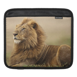 Kenya, Masai Mara. Adult male lion on termite iPad Sleeve