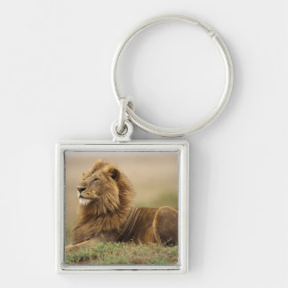 Kenya, Masai Mara. Adult male lion on termite Key Ring