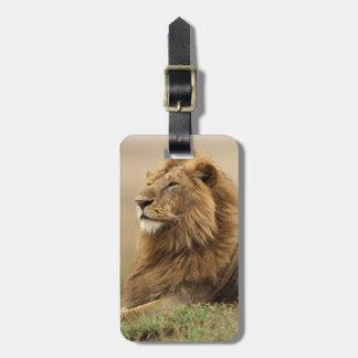 Kenya, Masai Mara. Adult male lion on termite Luggage Tag