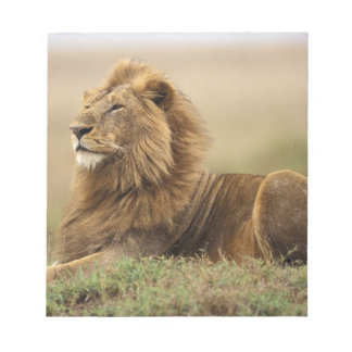 Kenya, Masai Mara. Adult male lion on termite Notepad
