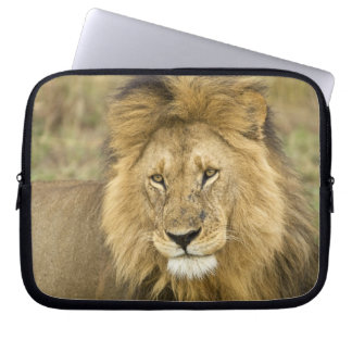 Kenya, Masai Mara. Close-up of lion. Credit as: Laptop Sleeve