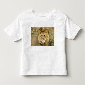 Kenya, Masai Mara. Close-up of lion. Credit as: Toddler T-Shirt