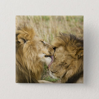 Kenya, Masai Mara. Close-up of one male lion 15 Cm Square Badge