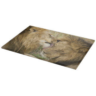Kenya, Masai Mara. Close-up of one male lion Cutting Board