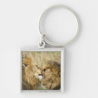 Kenya, Masai Mara. Close-up of one male lion Key Ring