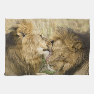 Kenya, Masai Mara. Close-up of one male lion Tea Towel