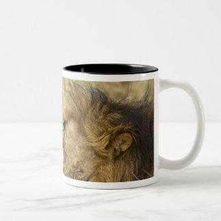 Kenya, Masai Mara. Close-up of one male lion Two-Tone Coffee Mug