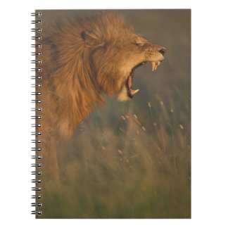 Kenya, Masai Mara Game Reserve, Adult male Lion Notebooks