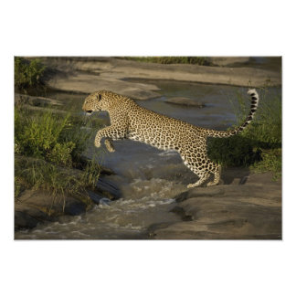 Kenya, Masai Mara Game Reserve. African 2 Photographic Print