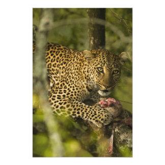 Kenya, Masai Mara Game Reserve. African 3 Photo Print