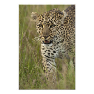 Kenya, Masai Mara Game Reserve. African 4 Art Photo