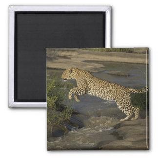 Kenya, Masai Mara Game Reserve. African 4 Magnet