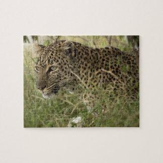 Kenya, Masai Mara Game Reserve. African Leopard 2 Jigsaw Puzzle