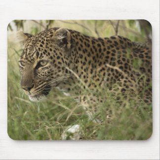 Kenya, Masai Mara Game Reserve. African Leopard 2 Mouse Mat