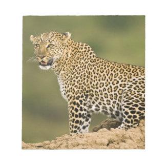 Kenya, Masai Mara Game Reserve. African Leopard Notepad