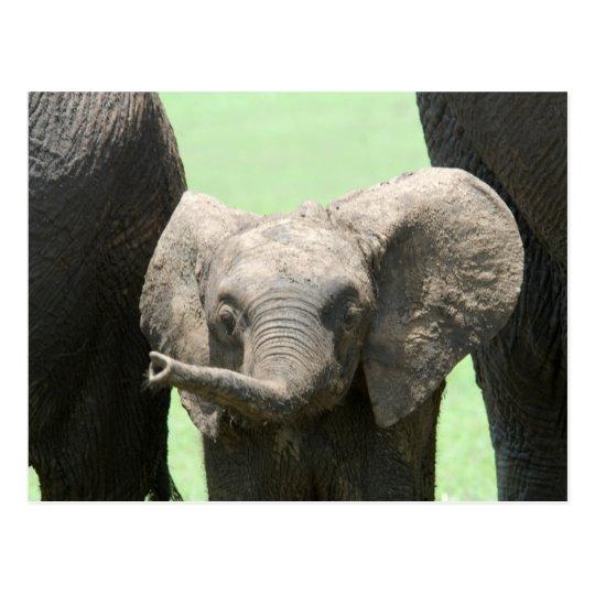 Kenya: Masai Mara Game Reserve (also known as