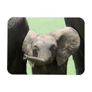 Kenya:  Masai Mara Game Reserve (also known as Rectangular Photo Magnet