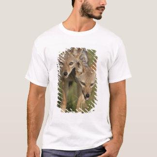 Kenya, Masai Mara Game Reserve. Black-backed T-Shirt