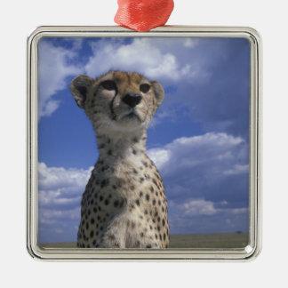 Kenya, Masai Mara Game Reserve, Close-up Christmas Ornament