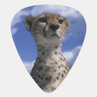 Kenya, Masai Mara Game Reserve, Close-up Guitar Pick