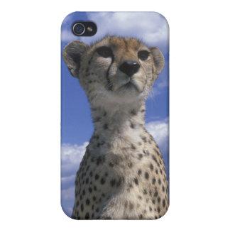 Kenya, Masai Mara Game Reserve, Close-up iPhone 4/4S Case