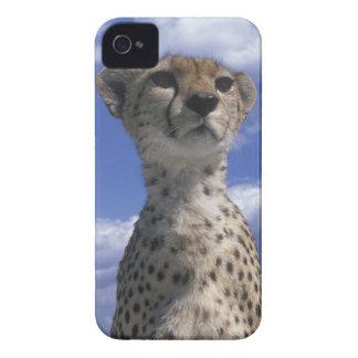 Kenya, Masai Mara Game Reserve, Close-up iPhone 4 Case-Mate Case