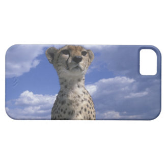 Kenya, Masai Mara Game Reserve, Close-up iPhone 5 Cover