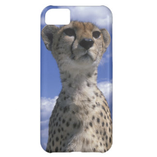 Kenya, Masai Mara Game Reserve, Close-up iPhone 5C Case