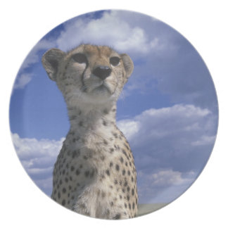 Kenya, Masai Mara Game Reserve, Close-up Plate