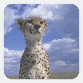 Kenya, Masai Mara Game Reserve, Close-up Square Sticker
