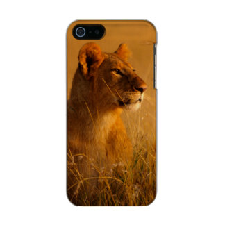 Kenya: Masai Mara Game Reserve, head of female Incipio Feather® Shine iPhone 5 Case