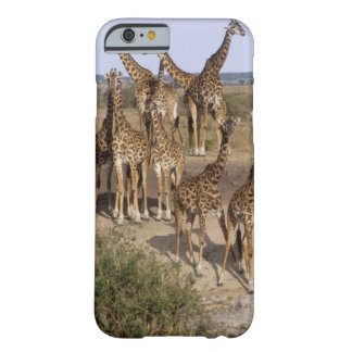 Kenya: Masai Mara Game Reserve herd of one dozen Barely There iPhone 6 Case
