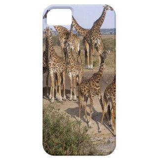 Kenya: Masai Mara Game Reserve herd of one dozen iPhone 5 Cover