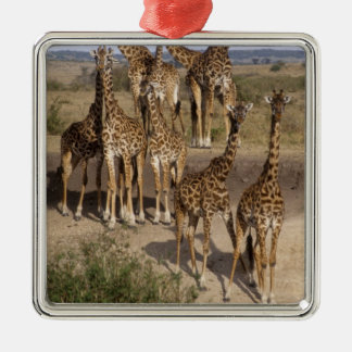 Kenya: Masai Mara Game Reserve herd of one dozen Silver-Colored Square Decoration