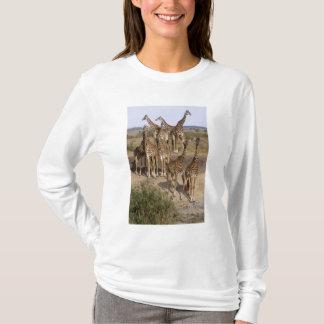 Kenya: Masai Mara Game Reserve herd of one dozen T-Shirt