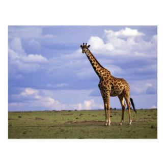 Kenya, Masai Mara Game Reserve. Kenyan Giraffe Postcard